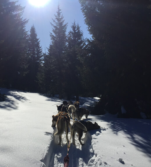 Dogsledding Tours